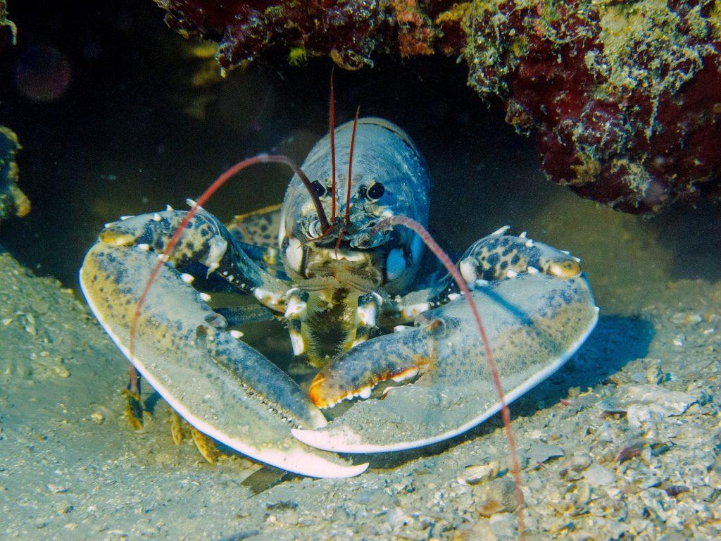 lobster-1612772_1280