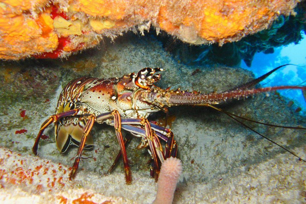 diving-1707742_1280